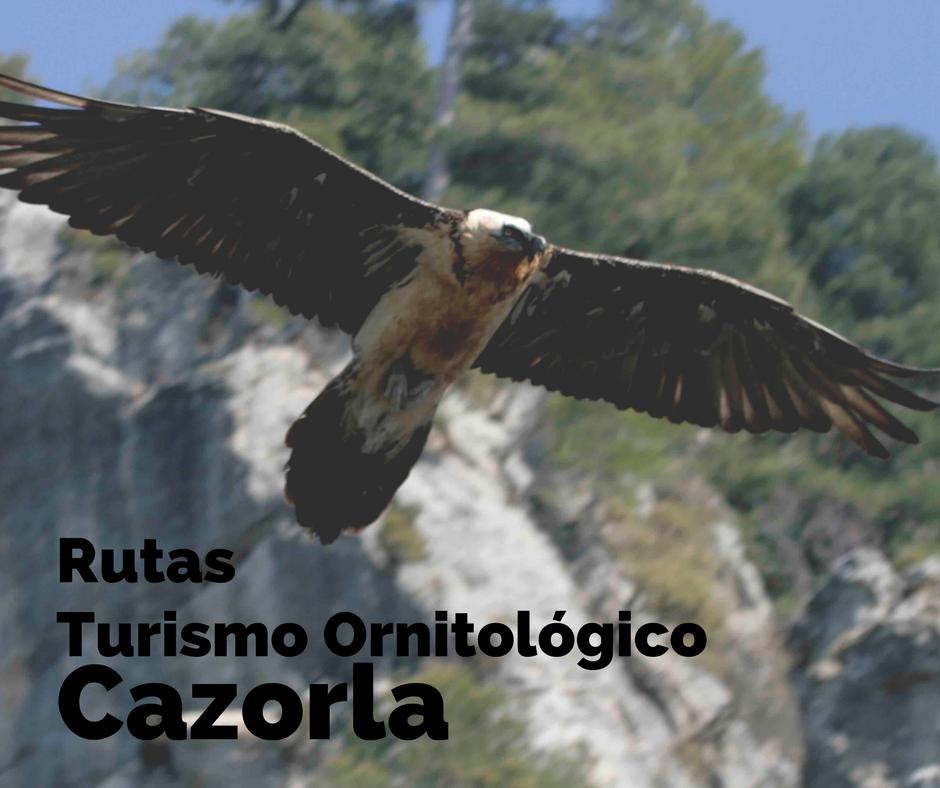 Rutas De Turismo Ornitológico En Cazorla