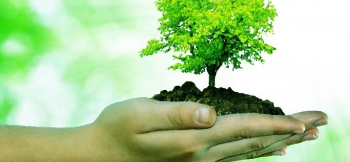 Cómo Cuidar El Medio Ambiente En Parque Natural De Sierra De Cazorla, Segura Y Las Villas