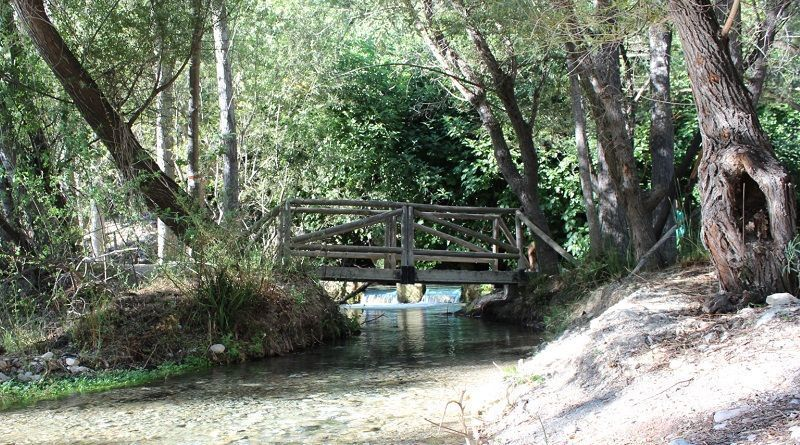 Bosque Encantado De Higueras Y Nacimiento Peralta
